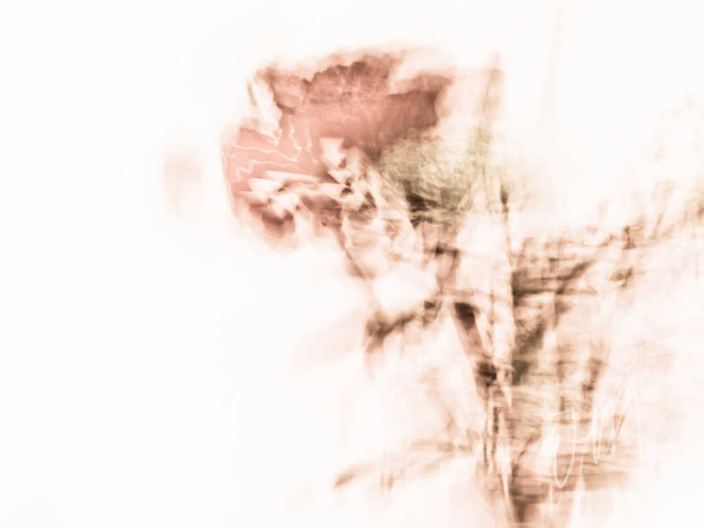 'Untitled Flower 2'