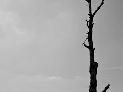 'Untitled Tree 1'