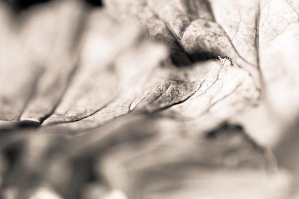 'Leaf 1'